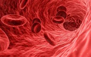 A Blood Vessel