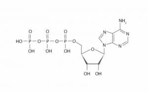 ATP-molecule-structure