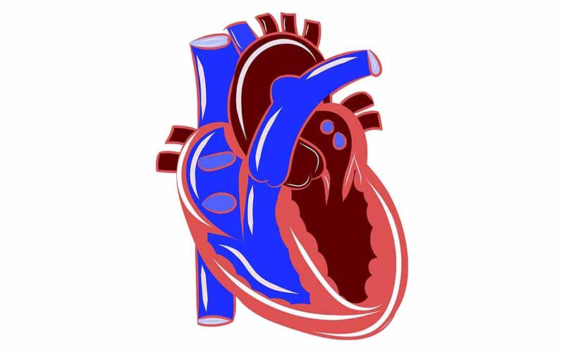 A cartoon heart