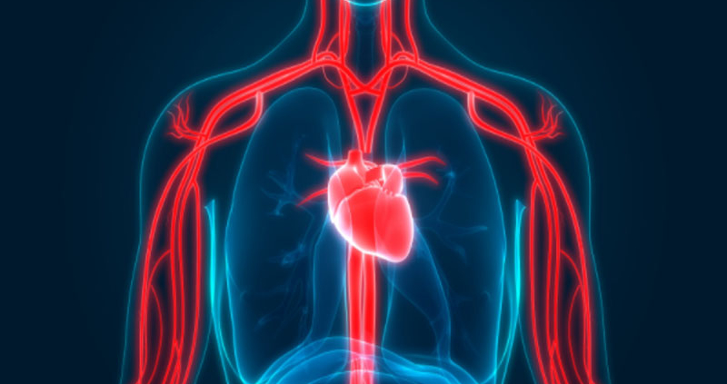 Healthy Blood Circulation