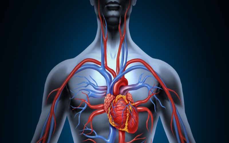 How does blood circulation work