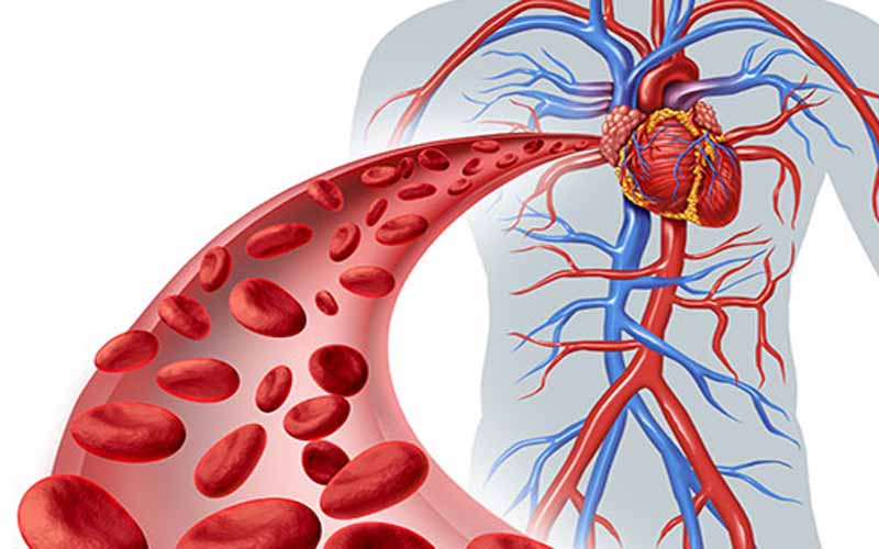 What is blood circulation